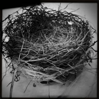 21st Century Nesting Practices &NEST