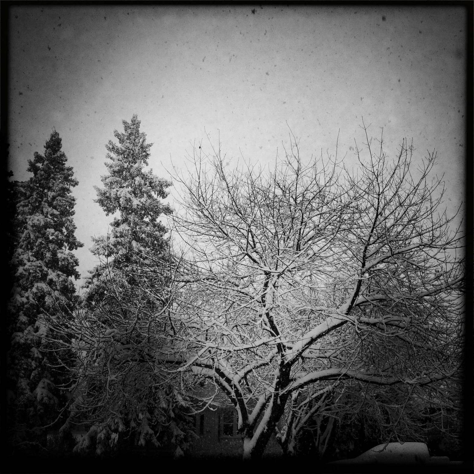 winter2WEB