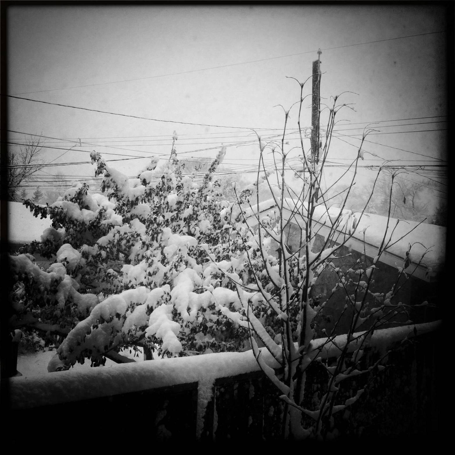 winter3WEB