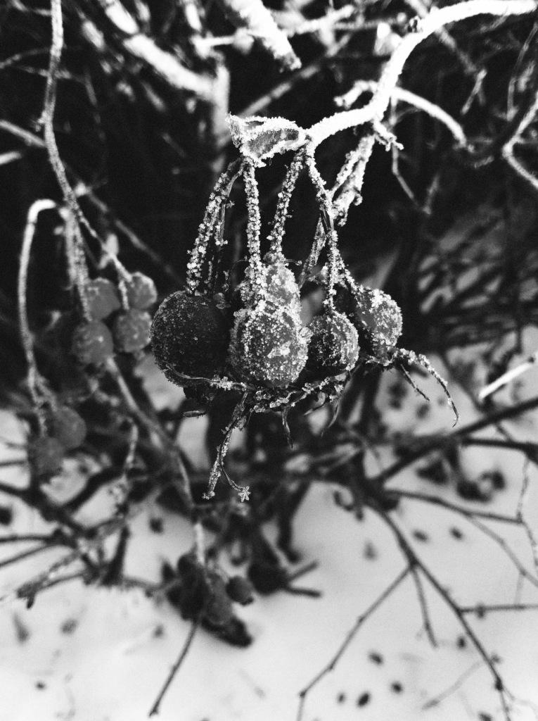 frost 5 BW WEB