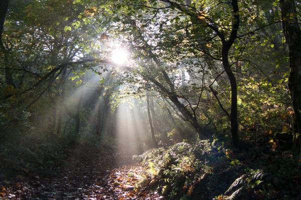 Bucks Valley Woods: walking into the autumn sun