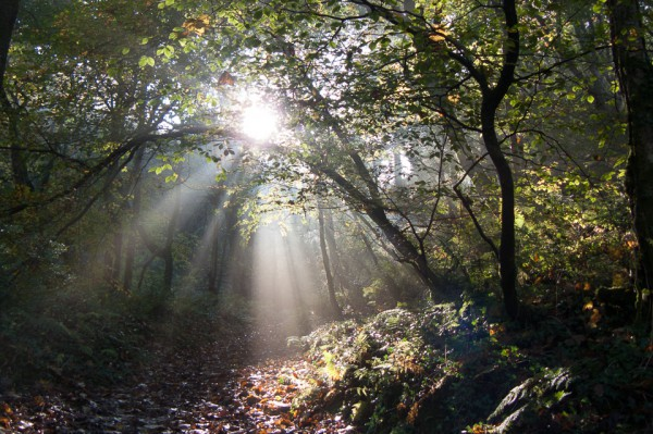 Bucks Valley Woods: walking into the autumn sun