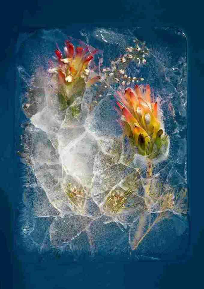 flowers-in-ice-1
